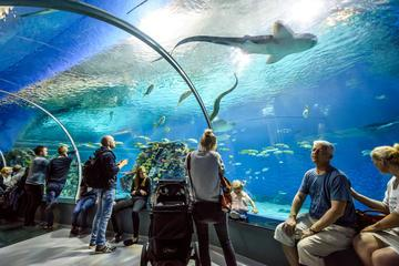 Baltimore maryland is an ideal destination for your for Aquarium washington dc