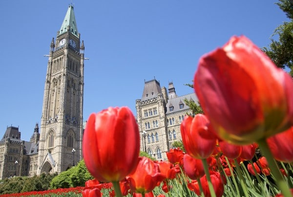Ottawa Canadian Tulip Festival Tour
